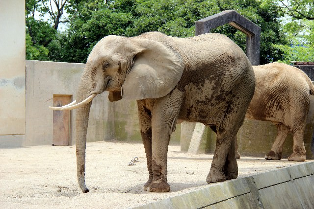 象で分かる!足のアーチとインソールの関係とは
