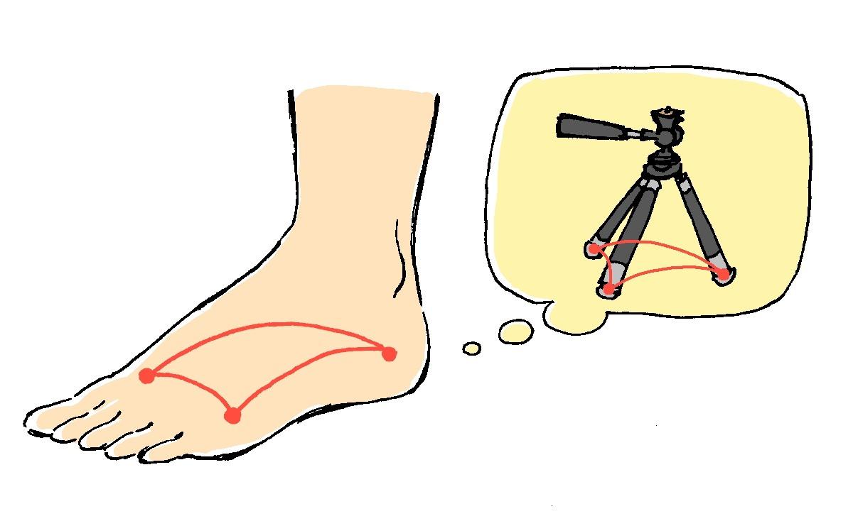 アーチは直立歩行するために必要不可欠な機能